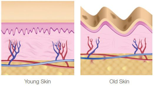 young-skin-old-skin